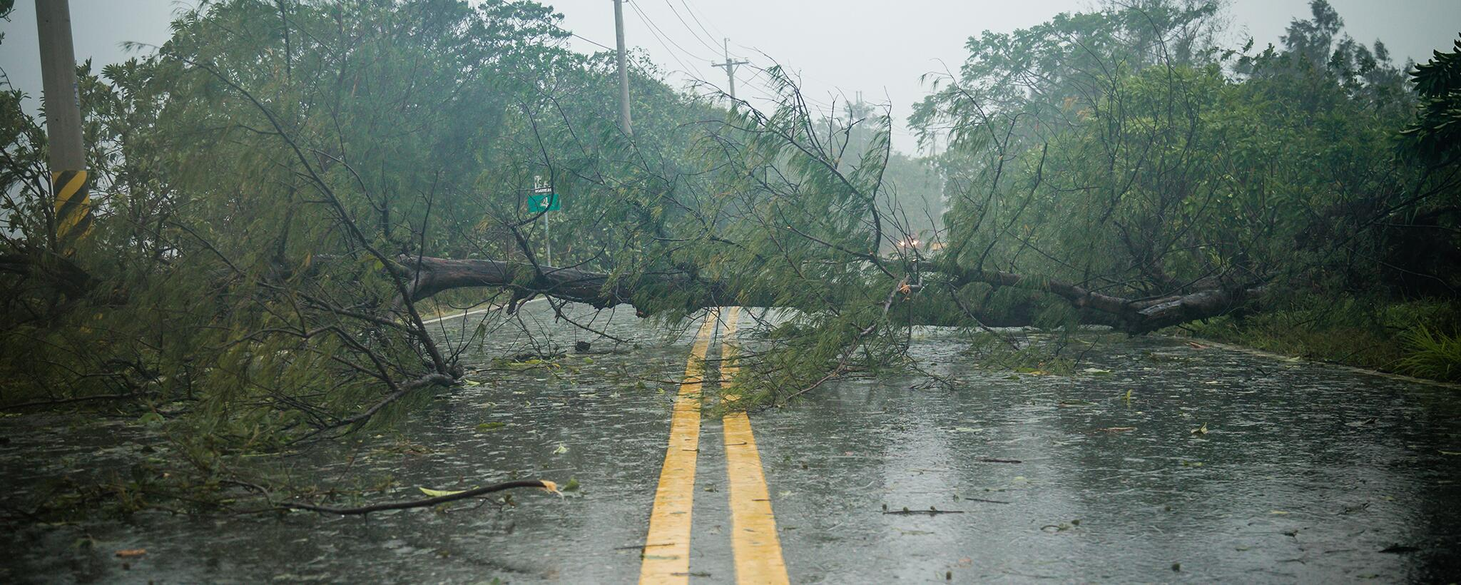 a downed tree blocks a road during a rain storm