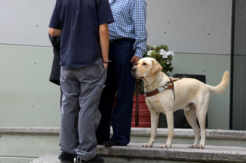 Visually impared person using a guide-dog