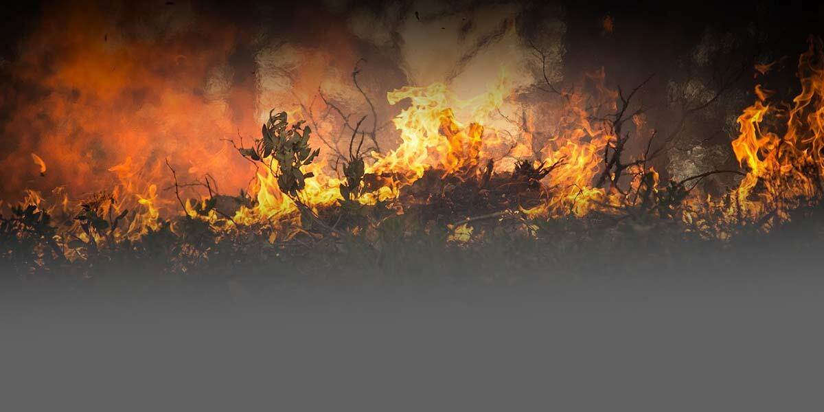 Photo of a fire burning trees and shrubs.