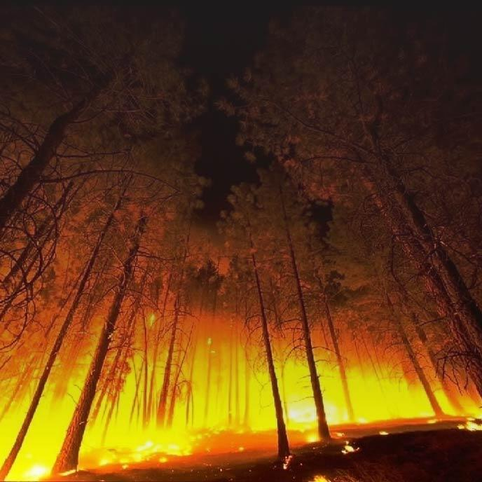 Photo of a forest at night with the red-orange glow from a wildfire.