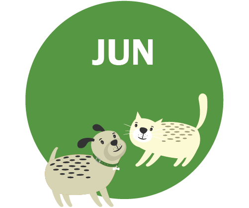 JUN Graphic - dog and cat playing