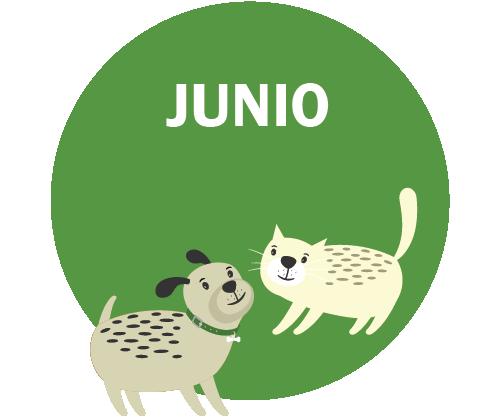 JUNIO Gráfico – perro y gato jugando
