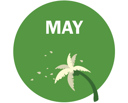 MAY Graphic - palm tree blowing in the wind