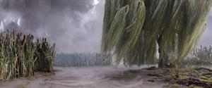 A weeping willow and swampy region in a blustery storm.